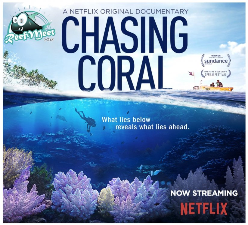 chasing corals.jpg